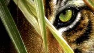 Eye-tiger